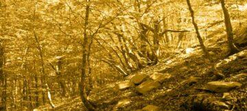 Perché in autunno gli alberi lasciano cadere le foglie